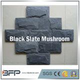 Champignon de pierre naturelle des tuiles en ardoise noire