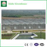 Van de multi-spanwijdte de LandbouwdieSerre van het PC- Blad in China wordt gemaakt