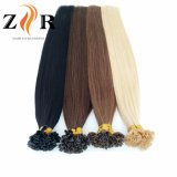 極度の品質の倍によって引かれるヨーロッパの毛の釘の先端の毛のSampelの毛