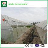 Serra agricola della pellicola per lattuga idroponica