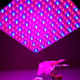 New Square 14W LED Grow Light Spectrum completo 225 Lâmpada LED azul Lâmpada para vegetais Alface