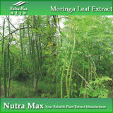 (100% naturel) 10:1 Used de Moringa Extract pour Nutrition& Healthcare