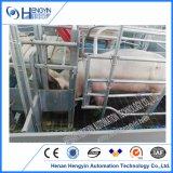 養豚装置の生む家によって電流を通されるブタの生む木枠