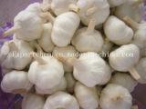Blanc pur légumes à l'ail AIL EN POUDRE NORMAL DE L'ail blanc