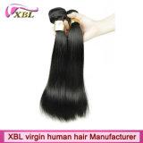 Trama indiana não processada da máquina do cabelo de Xbl 8A 100%