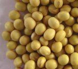 Indemnités organiques de poudre d'isoflavone de soja d'approvisionnement d'usine