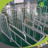 Parada galvanizada de la puerca de la INMERSIÓN caliente de la granja de cerdo del diseño moderno del fabricante de China