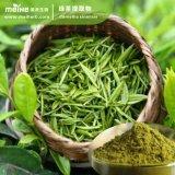 Estratto naturale del tè verde di 100%