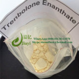 Pó esteróide amarelo positivo Trenbolone Enanthate para o crescimento do músculo