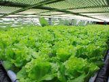 300W LED wachsen für Pflanzenbearbeitung hell