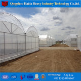 安い工場価格Hydroponicシステムプラスチックフィルムの小屋のトマトの温室