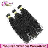 Xbl um cabelo humano Kinky do Afro natural Curly Mongolian fornecedor
