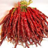 4-7cm Tianying Chili Grande Fornecedor