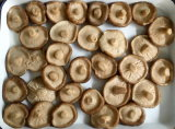 Hot Sale Champignons en conserve les conserves de champignons shiitake