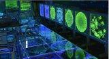 Machine van de Gravure van de laser Subsurface voor Decoratie