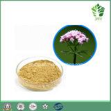 吉草酸0.4%-0.8%の10:1の吉草根のルートエキス