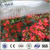 Vier-muur Plastic Blad van de Zon van het Blad van het Blad PC van het Polycarbonaat het Holle