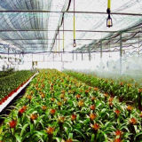 과일 꽃을%s 큰 플레스틱 필름 다중 경간 온실