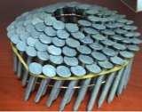 Bobine de clous de toiture (acier inoxydable 304 et 316) et de feux de croisement galvanisé à chaud
