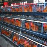 Une couche de poulet de type Cage avec système d'alimentation automatique