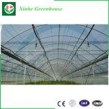 격리해서 또는 야채 또는 과일 또는 /Agriculture를 위한 PE/Po/Intelligent/Film 온실을 설치하거나 농장 또는 Aquacultu 또는 야채 또는 꽃 또는 농장 또는 정원 골라내거나 두배로 하십시오