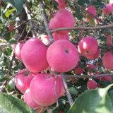 Una buena calidad fresca manzana roja