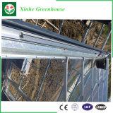 Invernadero solar película y de la hoja de acero galvanizadas calientes de la PC usado para la venta