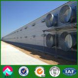 Fornitore della Cina del pollame del pollo della struttura d'acciaio con strumentazione messa in gabbia
