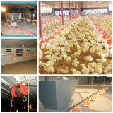 Pollame Feeding Equipment per Broiler Production