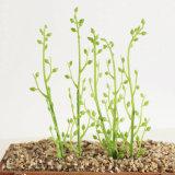 ホーム装飾の小さいフルーツの実生植物の人工的なプラント
