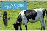 Rastreador GPS Animal Solar T500s à prova do anel de localização em tempo real para os animais de tamanho grande cavalo Vaca Camel Delimitação geográfica de rastreamento