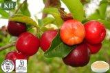 Extrait normal pur de cerise d'Acerola de vitamine C