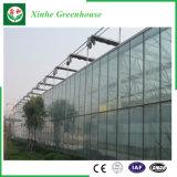 Agriculture/serre chaude en verre commerciale de passe-temps avec le système de ventilation