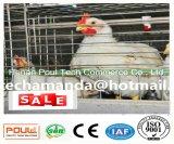 자동 방식 및 좋은 품질 & 가격 (유형)를 가진 보일러 닭 감금소