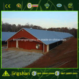 プレハブの鉄骨構造の商業鶏の養鶏場の家