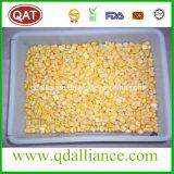 Aucun grains congelés par OGM de maïs avec le certificat cacher