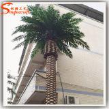 De Chinese Palmen van de Gegevens van Fabrikanten Grote Kunstmatige voor de Decoratie van de Tuin