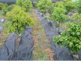 Antiweed-Matte100% pp. gesponnener Geotextileweed-Steuerkünstlicher Bodendeckel