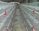 Compartimento de reprodutores de pombo High-End