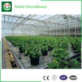 Estufa da folha do PC para agricultural por Xinhe