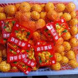 O mandarino doce fresco do bebê de Nanfeng