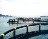 Cage de flottement de poissons en mer