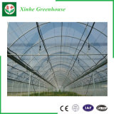 Estufa de vidro da estufa da película do baixo custo para Growing vegetal