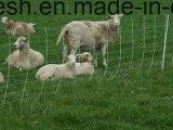 Qualità superiore ss 304, una maglia dei 316 bestiame del pascolo