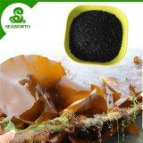 Extrait d'algues de flocon d'engrais sec