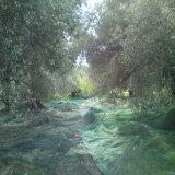 Réseau olive de moisson de PE de Vierge avec les additifs UV (YHZ-HON03)