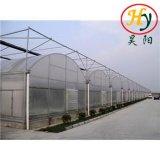 De Serre van de Fabrikant van China in Gunstige Prijs en Goede Kwaliteit