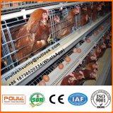 Конструкция продавая клетку слоя цыпленка для малого цыпленка