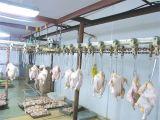 Riga automatica poco costosa di macellazione del pollo della Cina