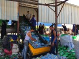 Отходы ПЭТ бутылку воды пластиковые мойка с утилизации конкурентоспособности цен